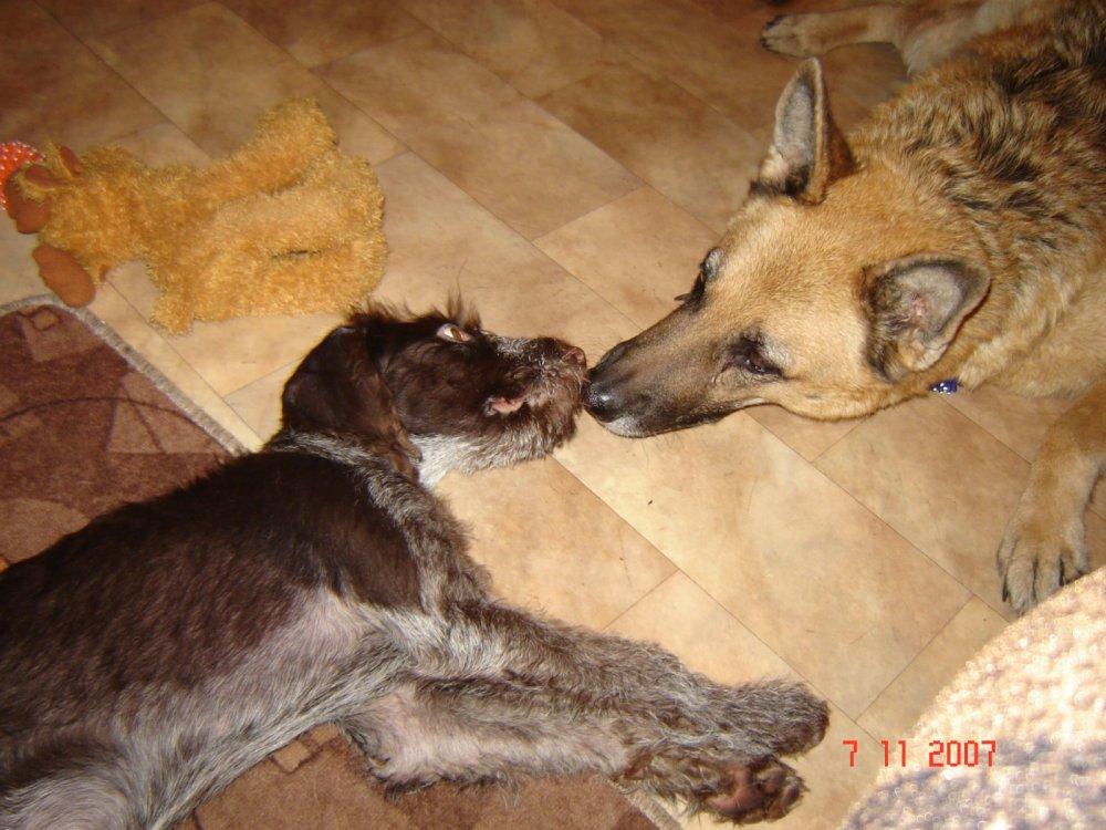 Когда-то у меня было две собаки....