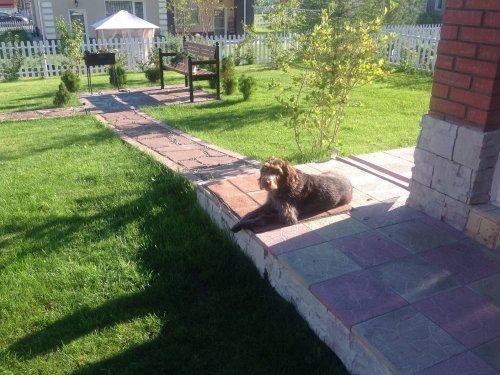 Псинка отдыхает после охоты.