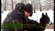 Трагедия Восточно Сибирской лайки