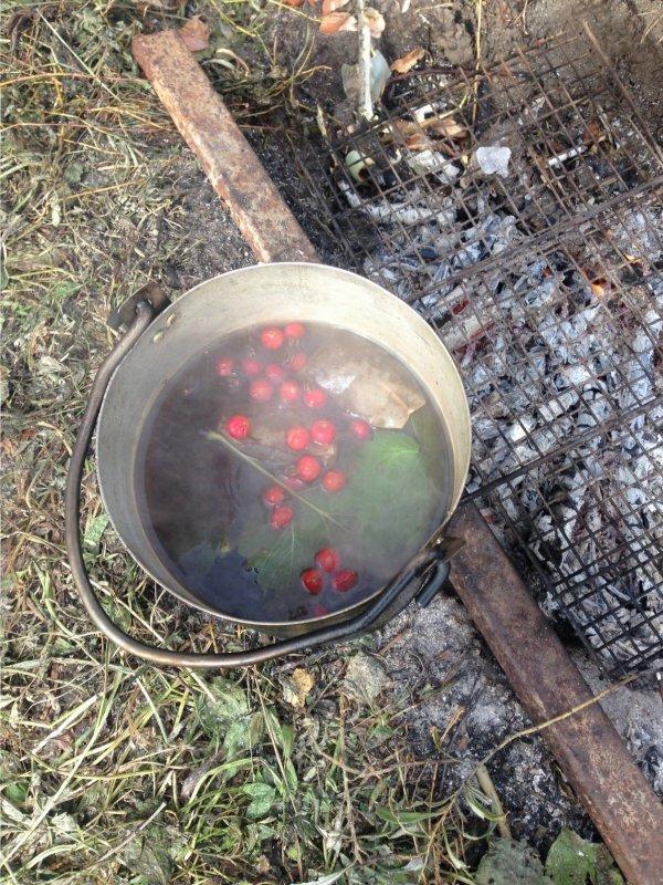 Лесной чай