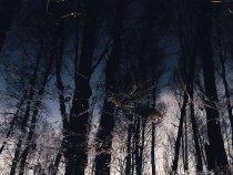 Паводок в весеннем лесу