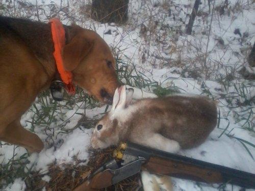 первый заяц, на первом снегу.