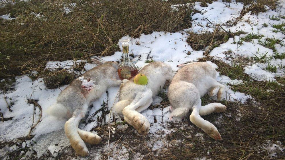 Зайчики на снегу:)))
