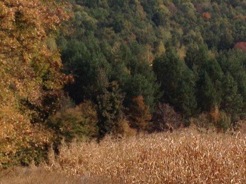 Где живет кабан или октябрьская прогулка по родным угодьям.