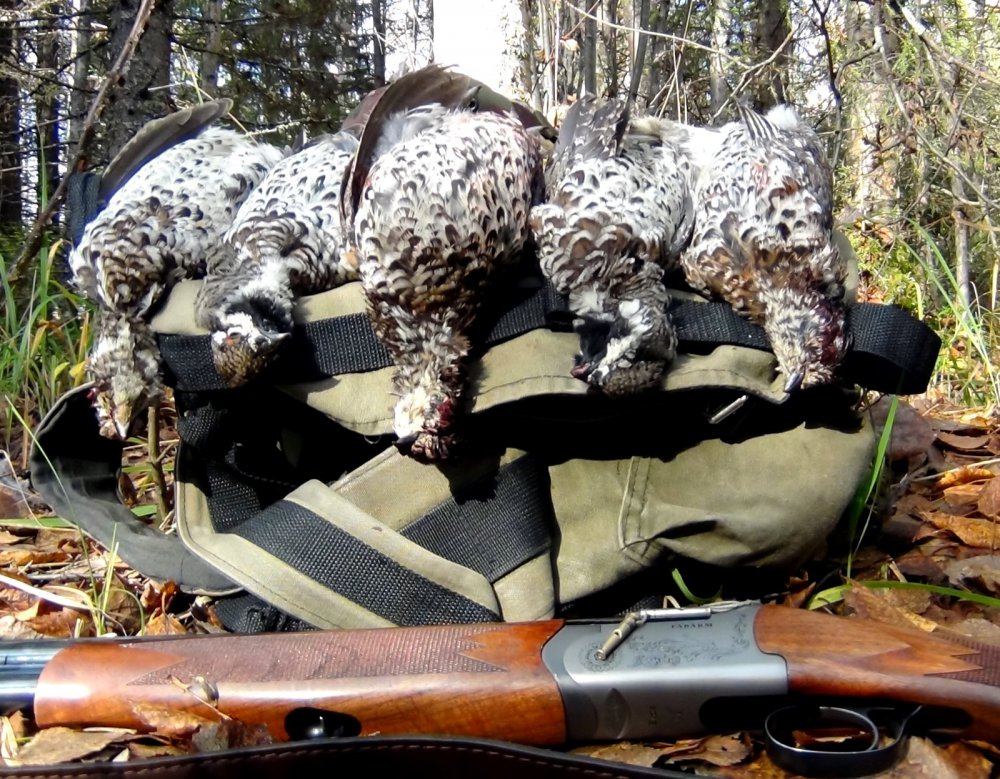 Рябчики, охота с манком