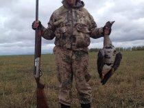 охота на гуся осенью 2015.