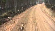 Заяц нападает на собаку