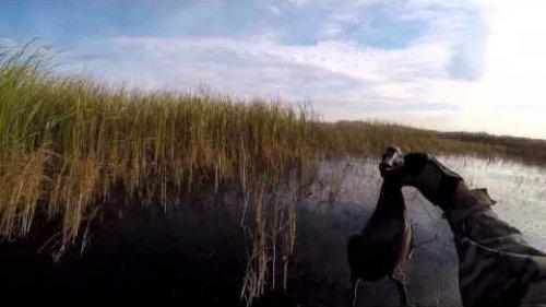 Охота на утку. Осень 2015
