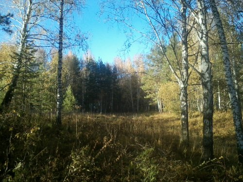 В краю лесных озер или сезон 2015