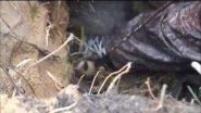 Охота на барсука 2015