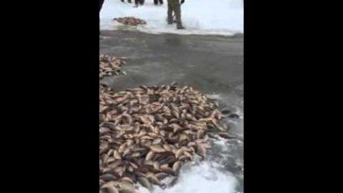 Подледный лов карася - мунгха