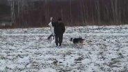 Охота с эстонскими гончими