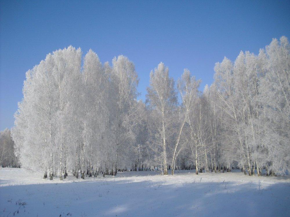 Красив сегодня лес на подъеме солнца!