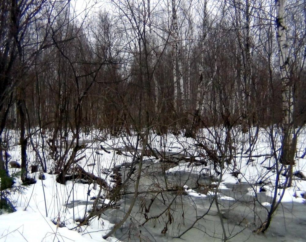 Лесной ручеёк