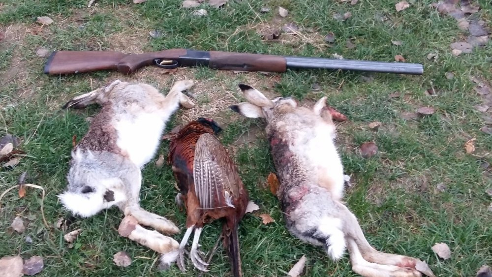 Результат дневной охоты
