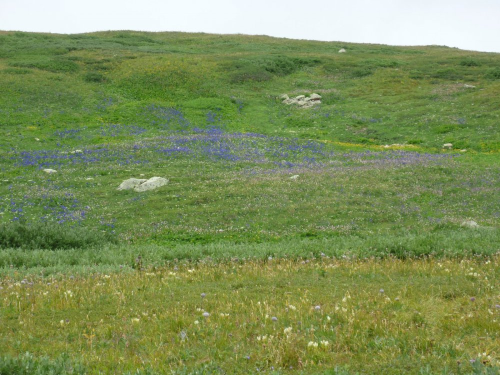 Цветочки на перевале