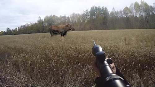 загонная охота, три лося