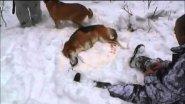 Горе - охотник застрелил двух породистых собак