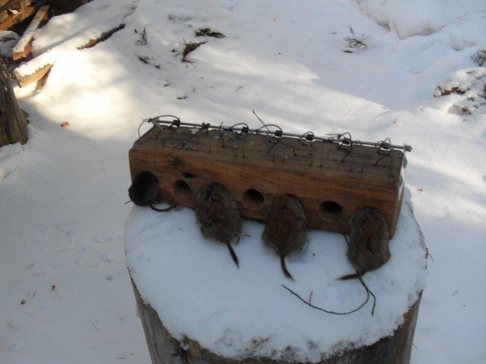Для kolchan1. Борьба с грызунами в зимовье.