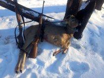 закрытие охоты декабрь 2015
