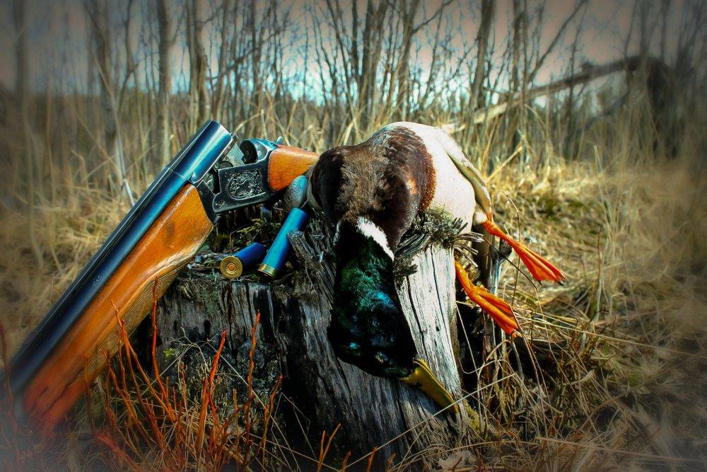 Открытие весенней охоты.
