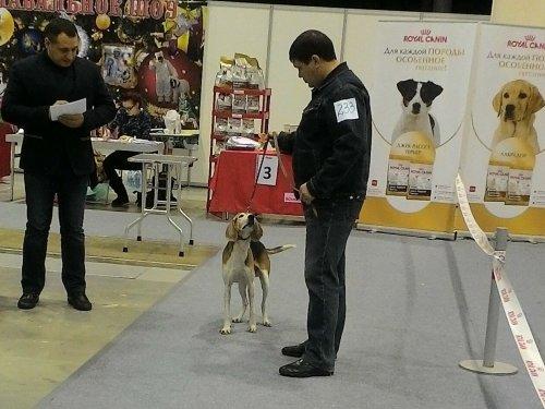 Всероссийская выставка собак всех пород ранга САС