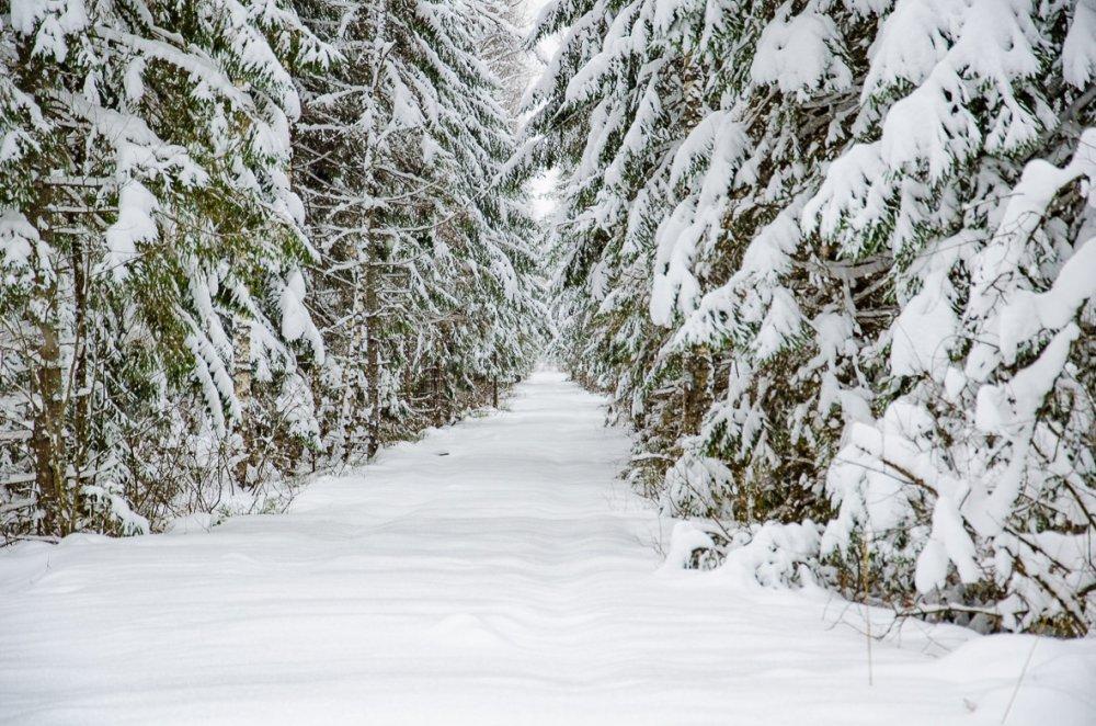 Лесной тоннель.