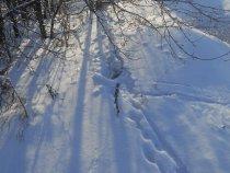 Мороз и солнце; день чудесный !
