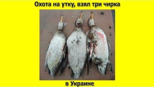 Охота на утку  взял три чирка