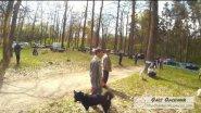 Выставка охотничьих собак в Киевской области