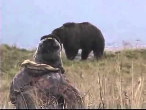 Extreme Bear Hunting in Kodiac Grizzly Bear Caccia all'orso Chasse