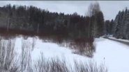 Лось, соблюдающий правила дорожного движения, обнаружен в России