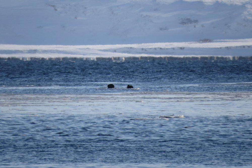 На льдине