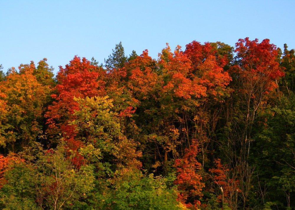 Красочная осень в Башкирии.