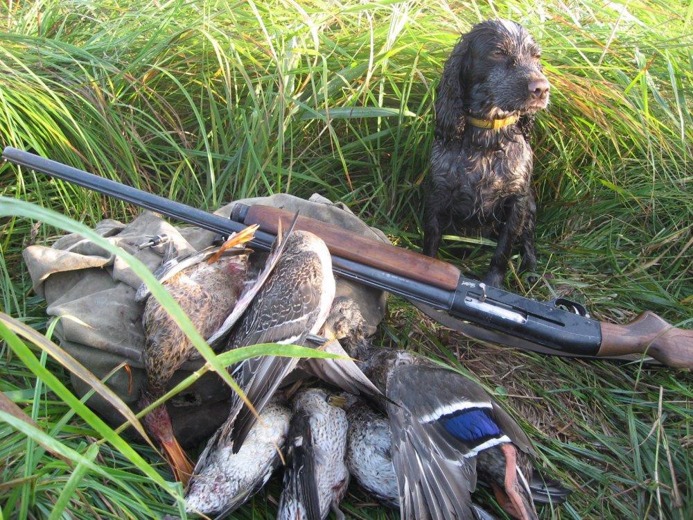 сортам совершенно фото с охоты сайт сибирский охотник чуткость, нежность, ласку