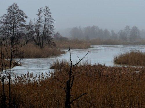 Туманный март. 1
