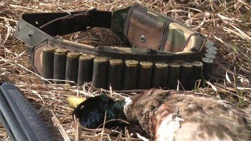 Весенняя охота на тетерева, уток и вальдшнепа. Охота весной на селезня с подсадной уткой