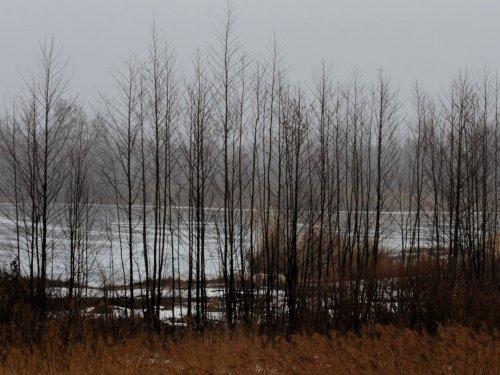 Туманный март. 2