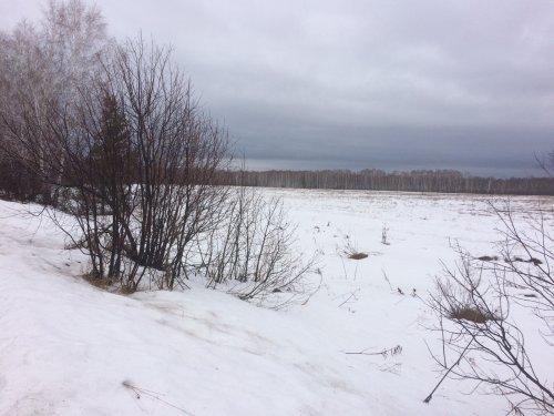 к вопросу снега в полях вокруг новосиба