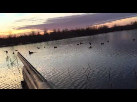 Duck hunt 1/10/2015