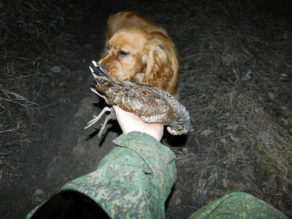Коккер тоже охотник