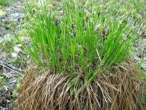 Растение болот