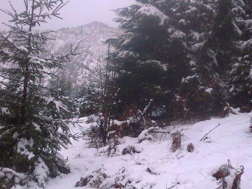 Дорога к зимовью