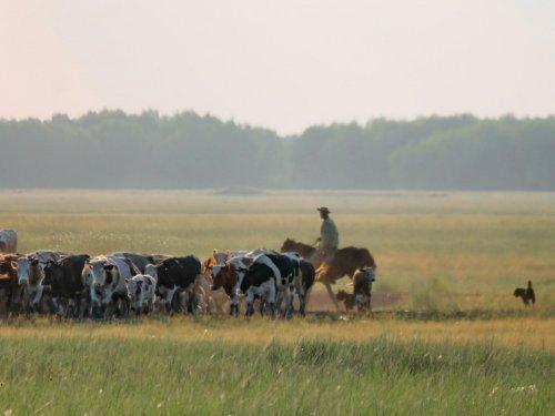 Сибирский ковбой