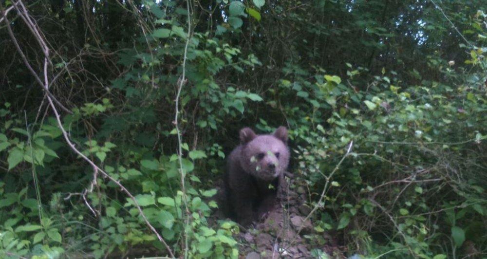 Медвежонок у дороги