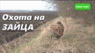 Охота на зайца Русская охота