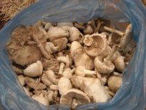 Что за грибы?
