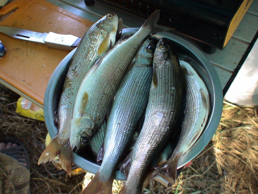 И на ужин рыба.