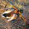 Охотников Алтайского края предупредили о случаях птичьего гриппа в регионе