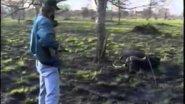 Опасная охота в Танзании